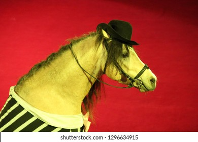 Horse in cap performing in circus ring. Beautiful portrait of circus fashionable animal. Head of horse in cap on red background