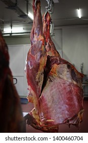 Horse carcasses hang in the shop for meat processing. Horse carcasses are ready for cutting. Meat business concept.