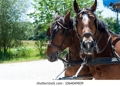 Horse carriage in Herreninsel