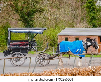 a horse and carriage,  Ireland's most traditional mode of transport, provides a Jaunting Car Tour at  Killarney Lake, County Kerry, Ireland