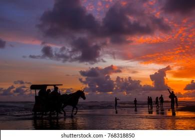 horse carriage at parangtritis beach