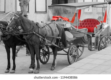 horse carriage for sightseeing