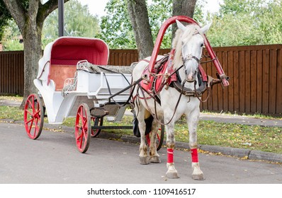 Horse with a carriage for walking around the city of Suzdal.