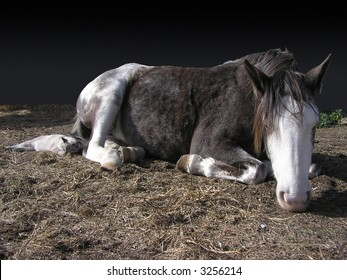 Horse and cat sleeping together