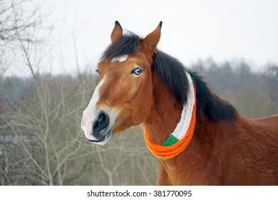 Horse celebrates St. Patrick's Day