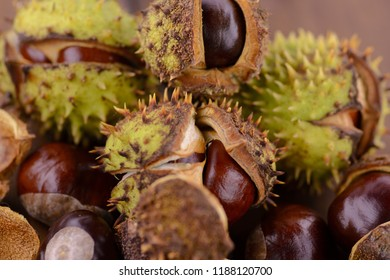 Horse chestnut with green thorns, the husk is somewhat dry.