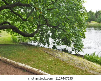 Horse chestnut tree branch overhanging a lake
