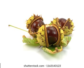 Horse Chestnuts on white background
