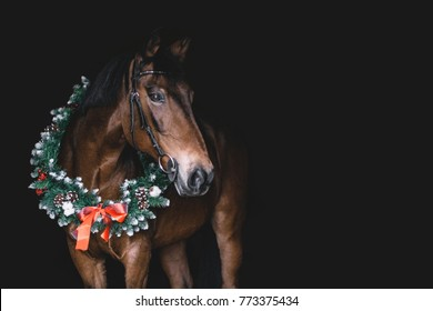 Christmas Horse.Christmas Horse Stock Photos Images Photography
