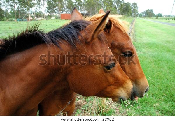 Horse close up 2