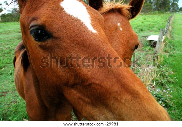 Horse close up 3