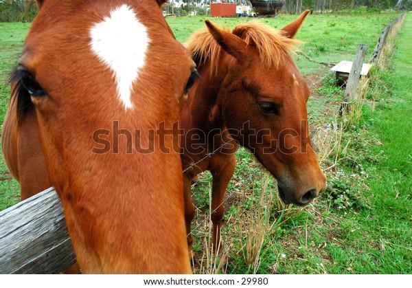 Horse close up 4