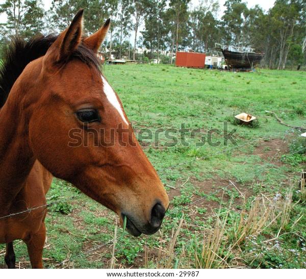 Horse close up 5