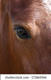 Horse close up, horse eye, horse portrait fragment photo, contrast photo, brown horse, domestic animal, strong animal, brown horse close up. Horse. Fauna