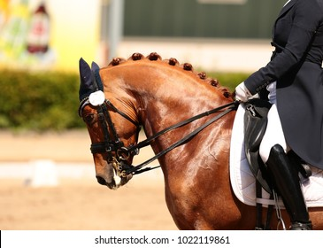 Horse in close-up in the dressage competition at the tournament course.