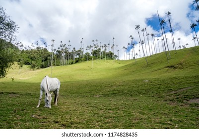 Horse in Cocora Valley  Colombia