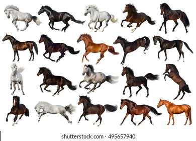 Horse collection isolated on white background