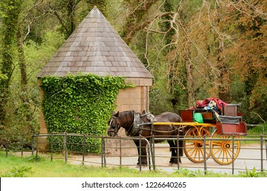 Horse and colourful jaunting car resting near ivy covered building at Muckross House Ireland