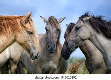Horse Consultation.