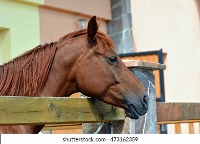 Horse in the corral