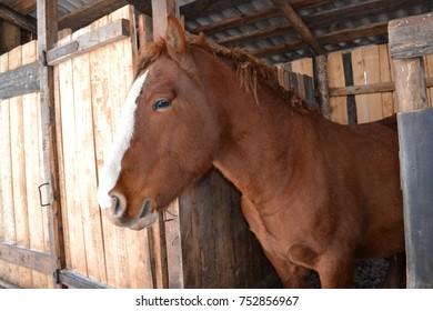 Horse at corral