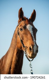 Horse in countryside, close-up