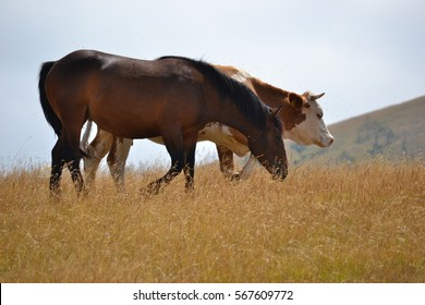 Horse and cow on Zlatibor mountain