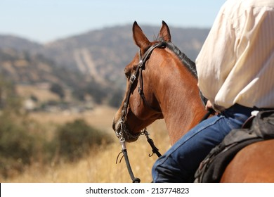A horse and cowboy gazing off into the distance.