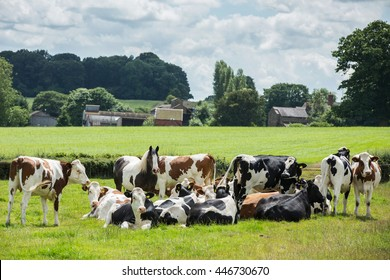 Horse with cows.