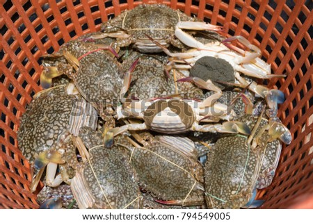 Horse Crab Sale Food Marketing Horse Stock Photo (Edit Now