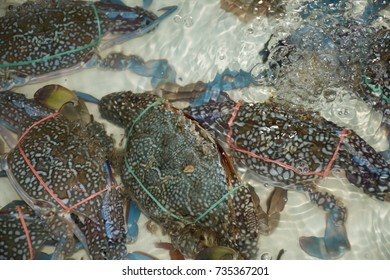 horse crab for seafood
