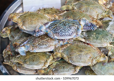 horse crab,Flower crab,Blue crab,Blue swimmer crab,Sand crab on ice at market