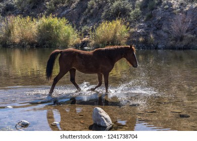 Horse Crossing a River in Tonto National Forest, AZ