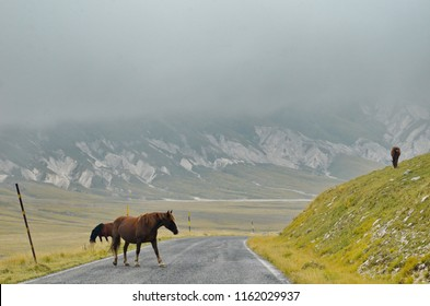 Horse crossing roadway in Gran Sasso National Park in Abruzzo, Italy