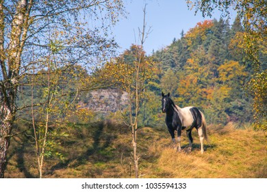 Horse in Czech Republic