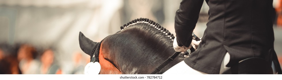 Horse dalbies photographed from behind in the dressage over the neck, with plaited braids
