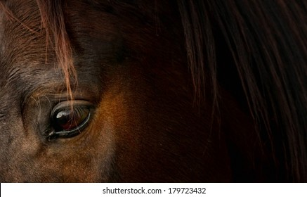 Horse in detail