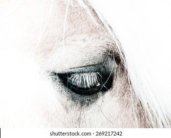 horse detail head and eye, high key