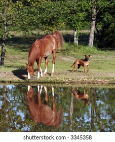 Horse and dog my pond