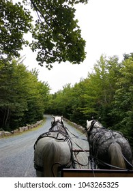 Horse Drawn Carriage Down Trail Lined with Rockefeller Teeth in Acadia National Park, Maine USA