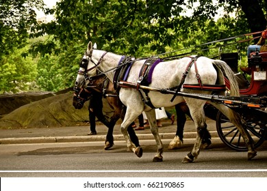 Horse Drawn Carriage / Main tourist attraction of tours of Central Park in New York. Transporting people while providing historical information of the largest urban park.