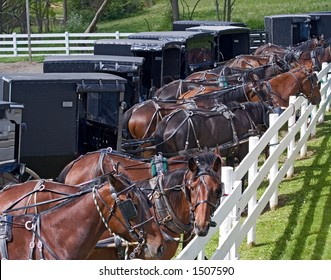 Horse drawn carriages parked at an Amish auction in Berlin, Ohio.