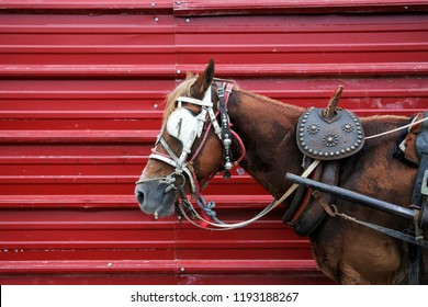 A horse drawn cart in Havana, Cuba. The horse has blinders, reign and a harness, and is standing in front of a red metal wall.