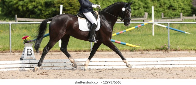 Horse dressage black thoroughbred in close-up under the rider in a dressage test, photographed from the side in the trot reinforcement during the suspension phase. In the background the dressage
