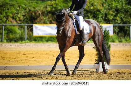 Horse dressage, dressage horse, with rider in a dressage test in side aisle (traverse).