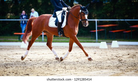 Horse in the dressage test with rider, recorded in the gait trot in the flight phase.