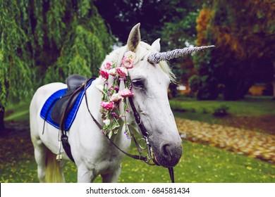 Pferd als Einhorn mit dem Horn gekleidet. Ideen für Fotoaufnahmen.Hochzeit.Party. Draußen