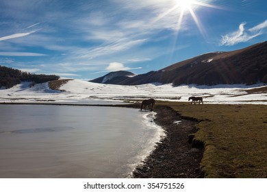 Horse drink in a frozen lake. Snowy background