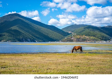 Horse drinking water at Napa Hai lake grasslands view with wetlands panorama on sunny day in Shangri-La Yunnan China - Shutterstock ID 1946204692