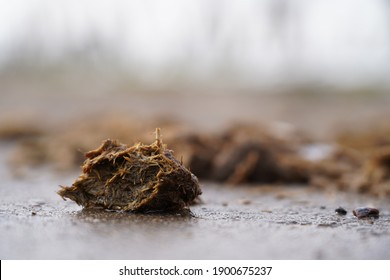 Horse droppings on a road wet from snow in the vineyards, horse poop, Stuttgart, Germany